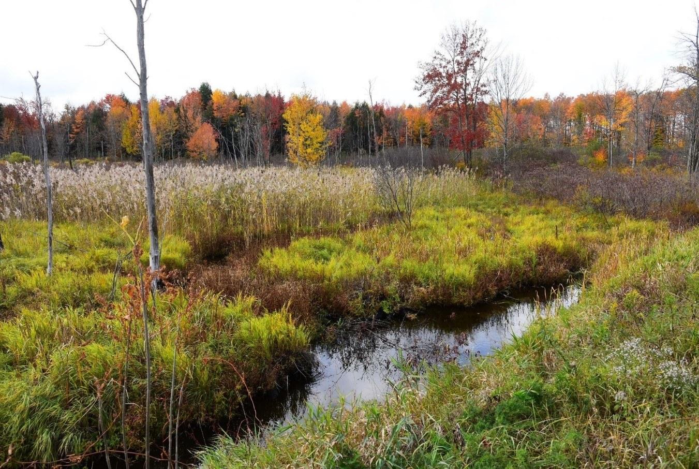 Source photo : milieu humide situé dans la Municipalité du Canton de Havelock. Crédit photo : David Rousseau, 15 octobre 2020